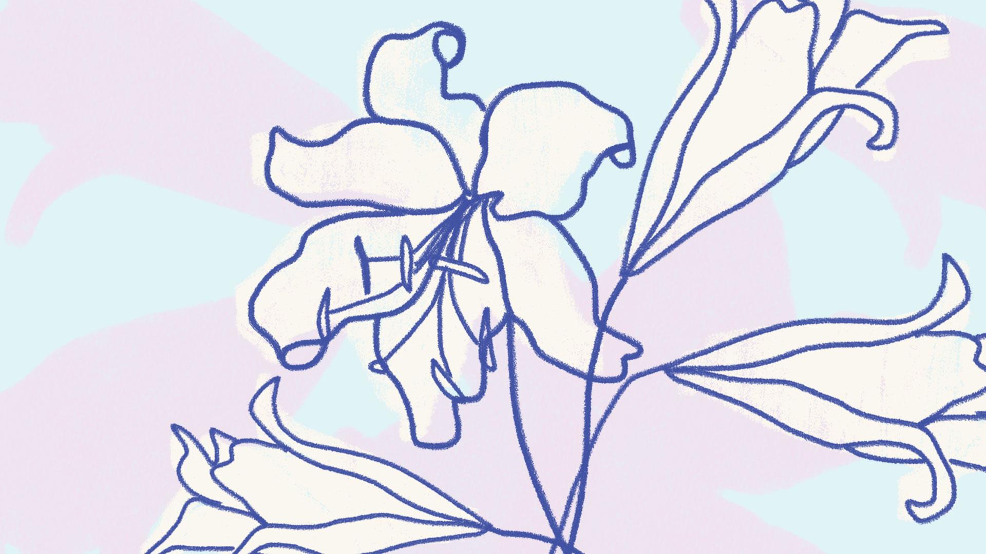 TS-BloomingoftheLillies
